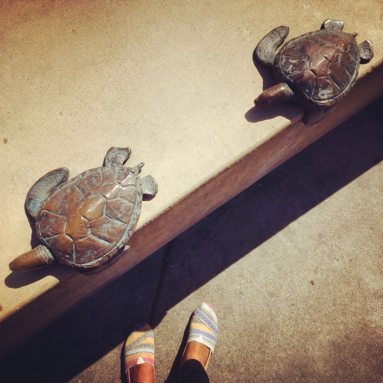 Spotted these turtles on the way